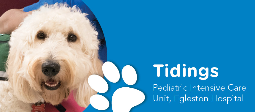 pediatric hospital canines for kids therapy dog