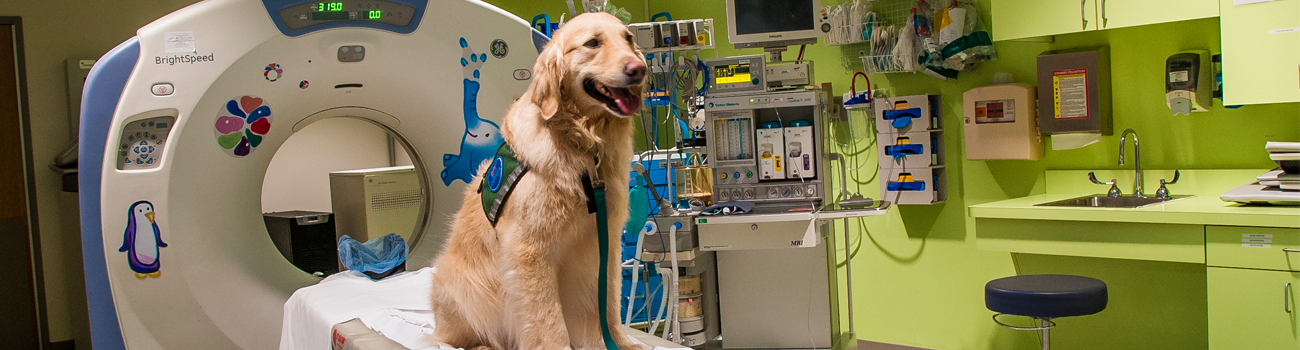 Pet therapy dog on CT scanner.